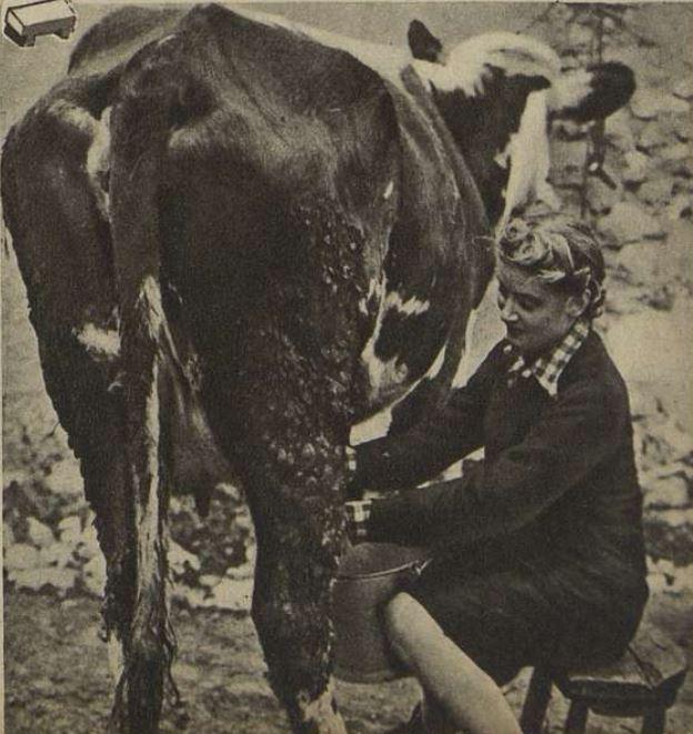 Blanchette Brunoy trait les vaches avec une aisance de grande dame.
